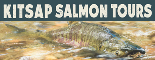 Salmon Migration Viewing & Tours