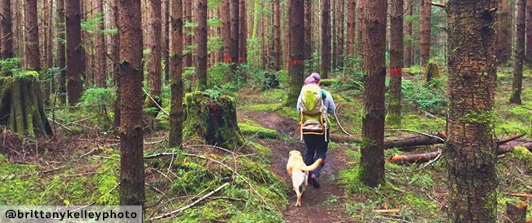 Pet Friendly Hikes on the beautiful Kitsap Peninsula