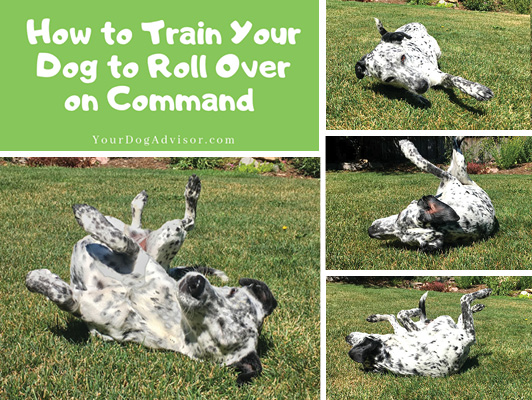 How to Train Your Dog to Roll Over